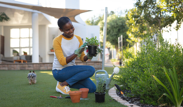 Smiling african american woman gardening, kneeling in garden holding plant, house in background