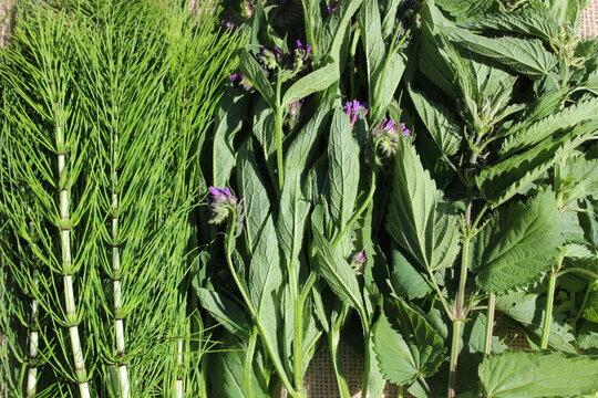 Verschiedene Pflanzen für Kräuterjauchen