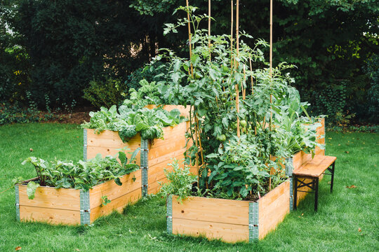 Vegetables planted in raised beds at garden during summer