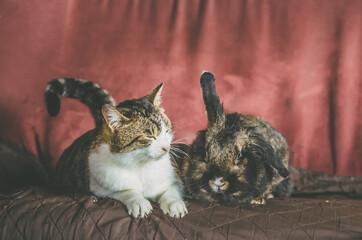 Fototapeta cat and rabbit sitting together side by side on sofy obraz