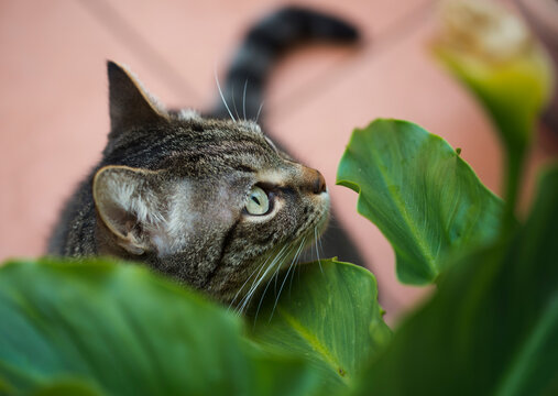 Portrait of gray cat standing under green leaves