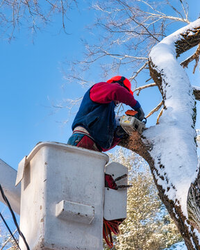 Man wearing hardhat with chainsaw cutting down trees in the winter