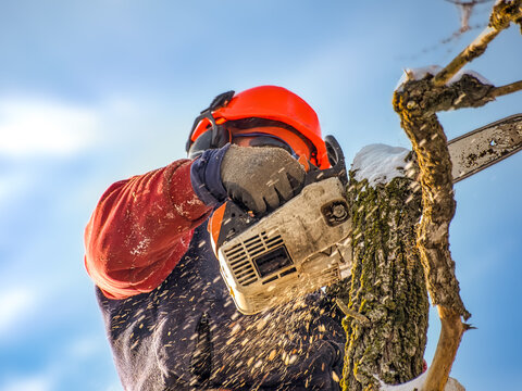 Man in hardhat with chainsaw cutting down a tree. Closeup