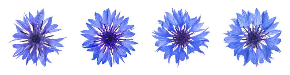 Fototapeta Set with beautiful blue cornflowers on white background. Banner design obraz
