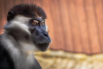 Obraz portret małpa - fototapety do salonu