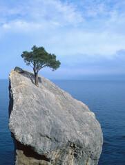 Fototapeta  tree that fights for life on a rock obraz