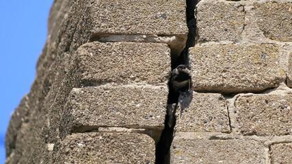 ptak w szczelinie muru