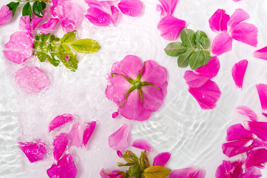 Flowers and petals of beautiful pink rose with water drops on white background. Creative waves and splashes and floral pattern.