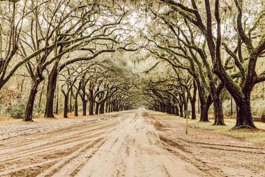Wormsloe Savannah, USA
