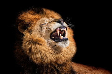 Lion portrait detail - fototapety na wymiar