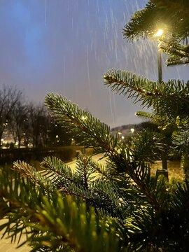 Evening fir and raindrops / Вечерняя ель и капли дождя (ByKate)