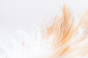 feather brown and white fluffy