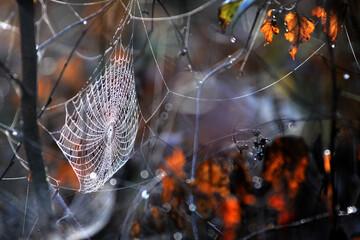 pajęczyny, nitki babiego lata w lesie - fototapety na wymiar