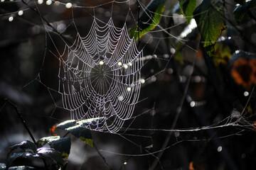 Obraz pajęczyny, nitki babiego lata w lesie - fototapety do salonu