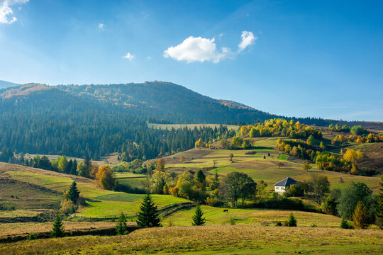 mountainous rural landscape in autumn. fields and trees on hills. carpathian countryside in evening light