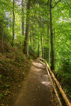 path through forest. wonderful nature scenery in summertime. sunny weather in the forenoon. great place for outdoor activities