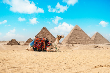 Camel sitting in front of Great Pyramids of Giza in Egypt. Pyramids against a bright blue sky