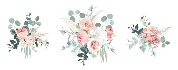 Obraz Blush pink garden roses, ranunculus, hydrangea flowers vector design bouquets - fototapety do salonu