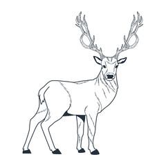 reindeer wild animal