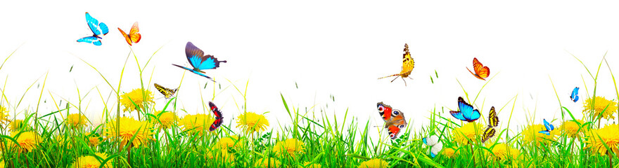 Fototapeta Beautiful nature view of butterfly on blurred background in garden. obraz