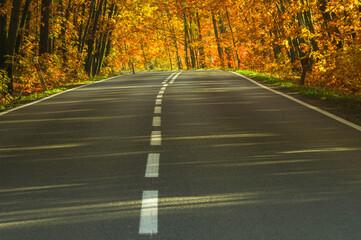 Obraz Asfaltowa droga wśród drzew pokrytych żółtymi liśćmi. - fototapety do salonu