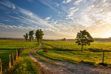Obraz A field road between pastures and meadows at sunrise near the village of Gamerki Wielkie in Warmia and Mazury in Poland - fototapety do salonu