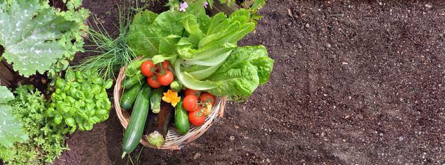 Fototapeta basket filled with colorful fresh vegetables in the garden obraz