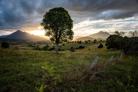 Mount Barney and tree at Sunset