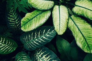 Fototapeta leaves texture on the dark background obraz