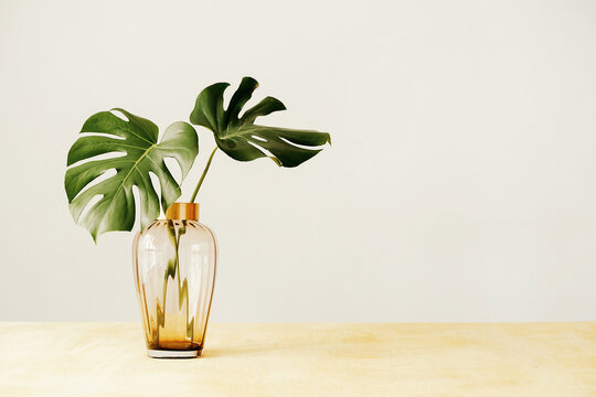 Vase with green plant on table