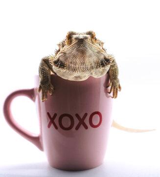 Bearded Dragon celebrating Valentines Day