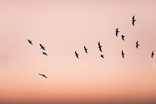 Silueta de grupo de pájaros volando en el claro cielo del atardecer