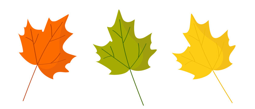 Maple leaves are red, yellow and green. Autumn composition for postcard design in natural style.