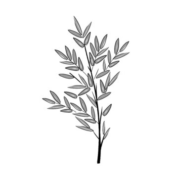 hand drawn illustration of bamboo tree and leaves in simple icon drawing