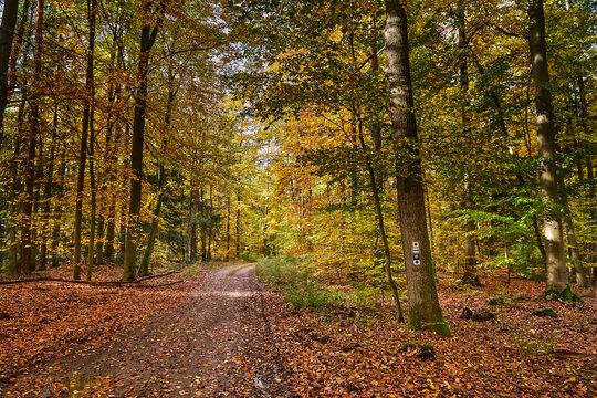 Wegzeichen für den 66-Seen-Wanderweg und den Jakobsweg an einem Baum im Herbstwald bei Melchow