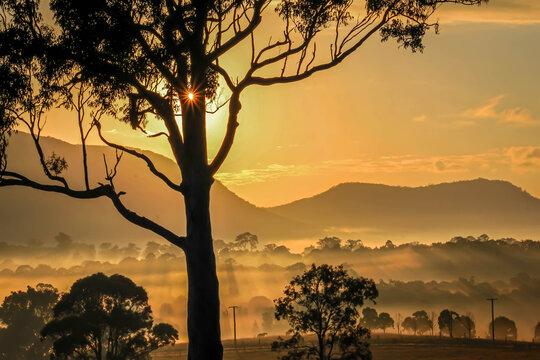 Sunburst through silhouette tree overlooking foggy valley