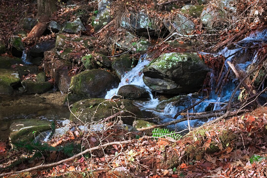 Creek flowing over a rock that looks like a catfish head in autumn in the Cohutta Wilderness mountains in North Georgia