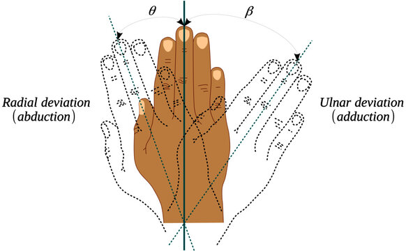Abduction and adduction movements of the wrist joint