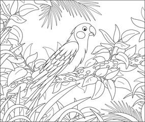 Exotic parrot with a long tail perched on a tree branch in a tropical jungle, black and white outline vector cartoon illustration for a coloring book page