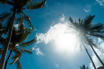 Obraz Tropikalny krajobraz, palmy kokosowe na tle nieba i słońca. - fototapety do salonu