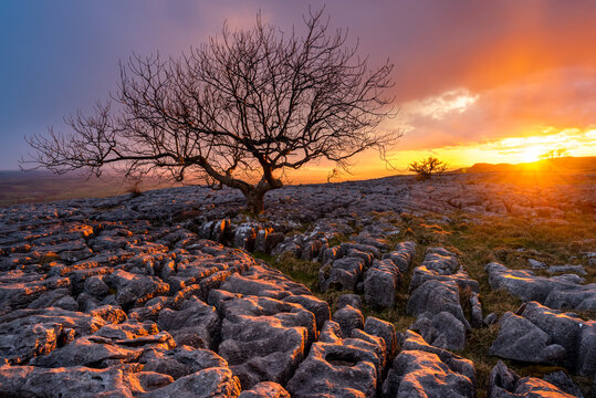 Lone tree with interesting rocks in foreground and beautiful sunset background in the Yorkshire Dales National Park, UK.