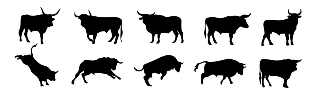 Set of silhouettes of different bull poses. Farm animal. Vector illustration.