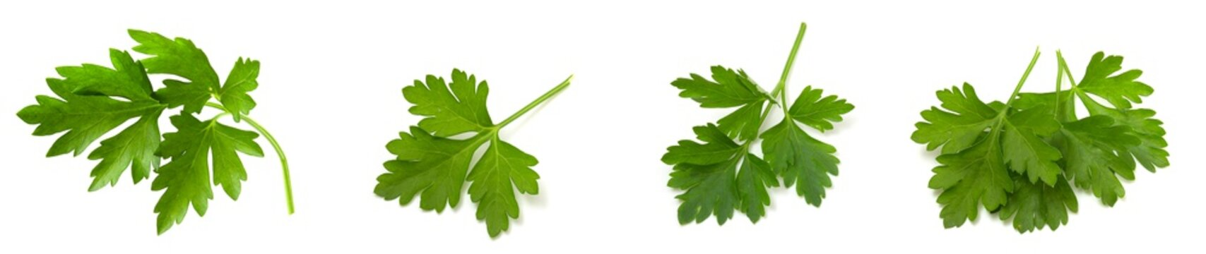 Fresh vegetarian greens, fragrant parsley with vitamins isolated on white background.