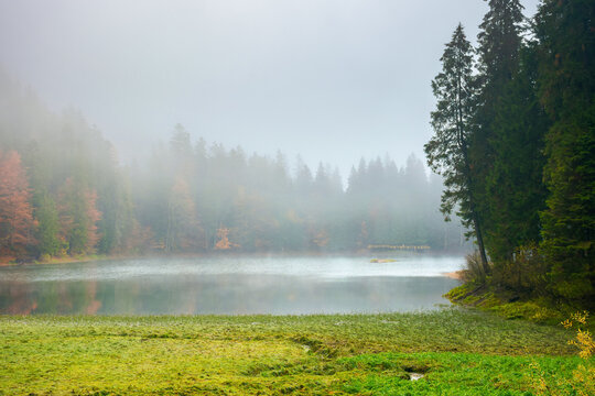 foggy morning scenery on the lake. beautiful nature of synevyr national park in autumn. fir forest on the shore reflecting in the water
