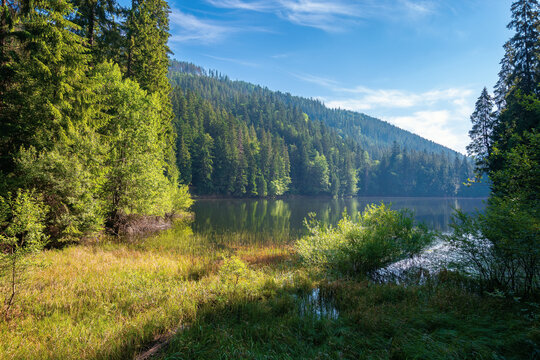 landscape with mountain lake in the morning. peaceful summer landscape coniferous forest around the body of water. hazy atmosphere. bright sunny weather with clouds on the blue sky