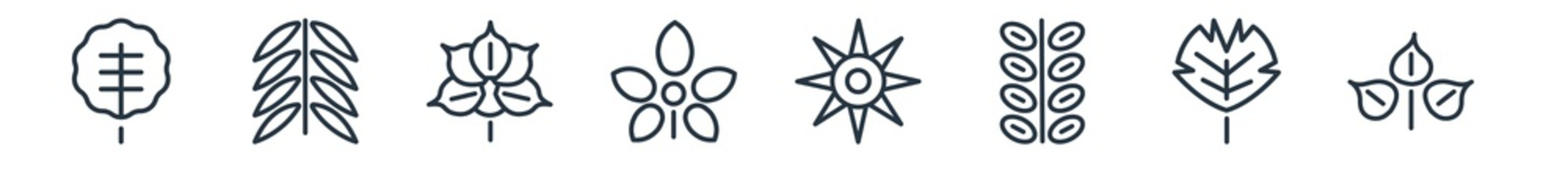 linear set of nature outline icons. line vector icons such as orbicular, black willow, sprig with five leaves, chestnut leaf, sol, acacia vector illustration.