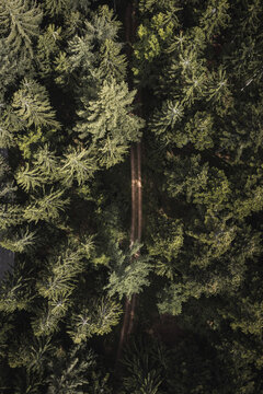 top down drone shot in forest