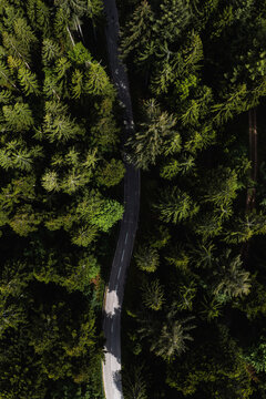 top down drone shot from Raod in Forest