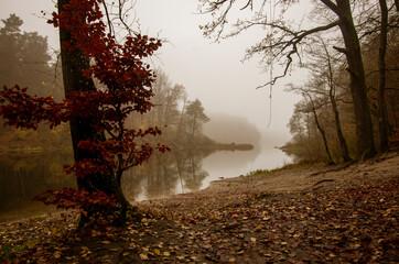 Fototapeta Poranek w pełnym jesiennych kolorów lesie.  obraz