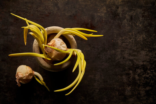 Composition of sprouted onion on mortar on black background